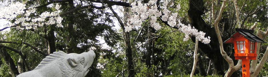 足立山妙見宮の春景色